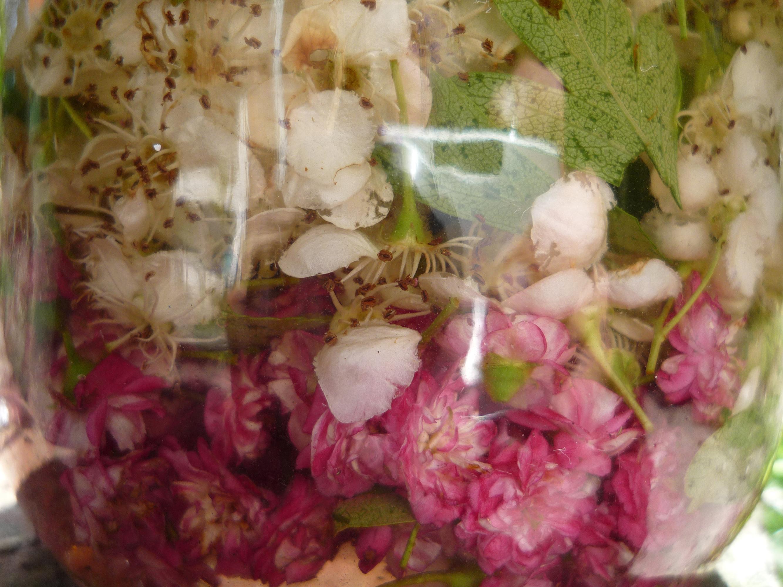 cherry blossom cordial